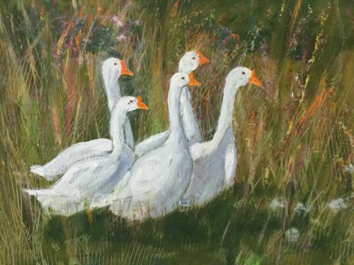 Chinese White Geese