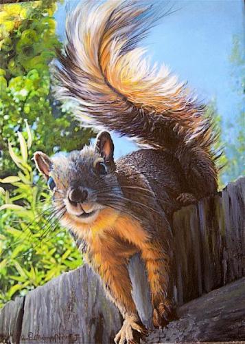 Glenoveer Squirrel